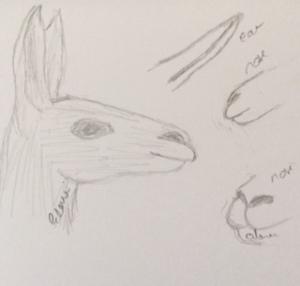 Llama sketches